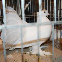 FOTO: V Beltincih razstavili male živali